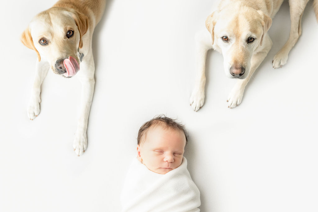 Minneapolis Newborn Photographer |Studio Newborn Photographer | Newborn Photos with Dogs